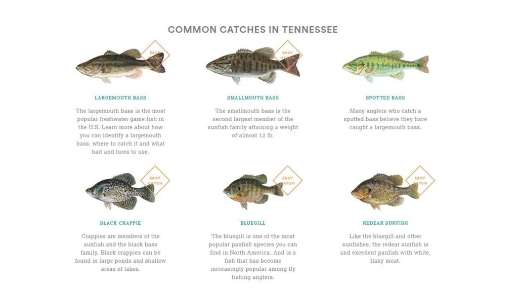 Guide to Fishing in TN