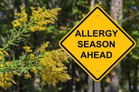Top 3 Allergen Hideaways