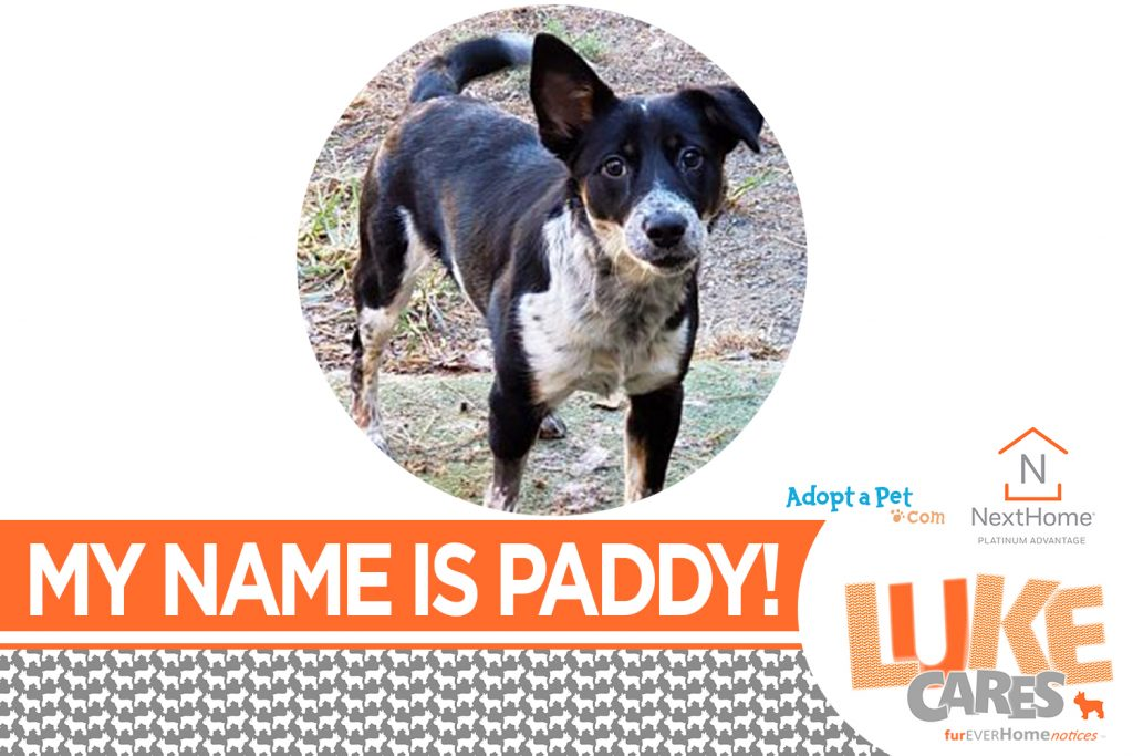 Hi!  My name is Paddy! See me here:  http://bit.ly/2J9f5MW  Discover Luke's other friends in need of a furEVER home in the Carolinas!