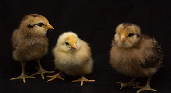 Why All the Chicken Littles Should Calm Down | Simplifying The Market