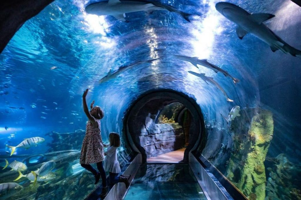 children in aquarium tunnel surrounded by tropical fish