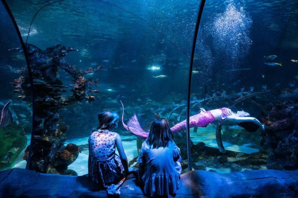 Two young girls watch a mermaid impersonator swim in an aquarium tank surrounded by fish and aquatic plants