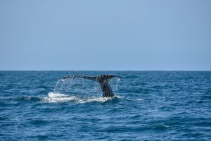 whale watching photo